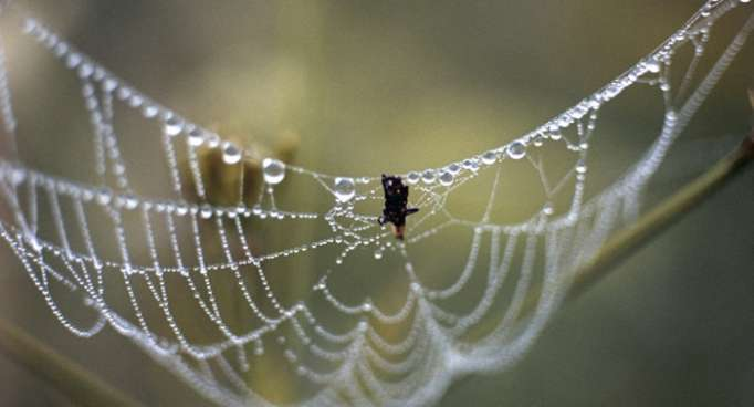 Griechenland: Stadtteil in Spinnweben gehüllt – VIDEO