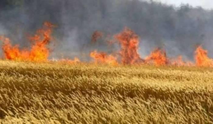 Siyəzəndə 100 hektar ərazi yanıb
