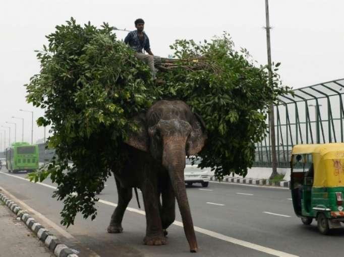 Les derniers éléphants de Delhi se mettent en ordre de marche