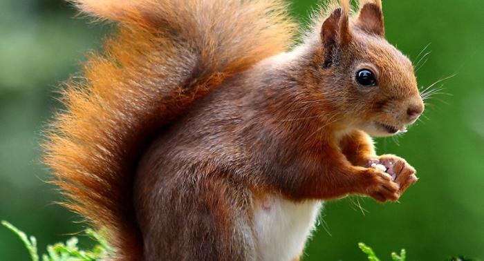 Un écureuil empêche le décollage d