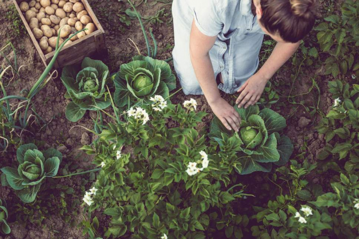 7 ways to live a more environmentally friendly life