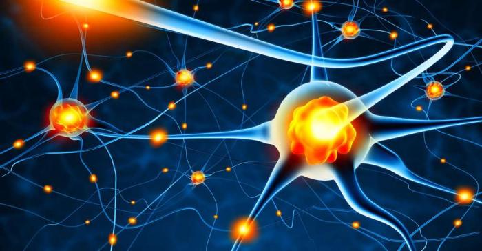 Des neuroscientifiques ont découvert une différence dans les cellules cérébrales humaines les rendant uniques