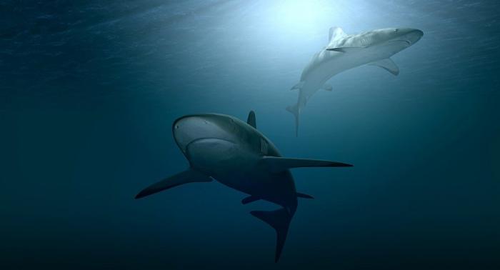 Un hombre nada desnudo con tiburones y recibe un castigo (vídeo)