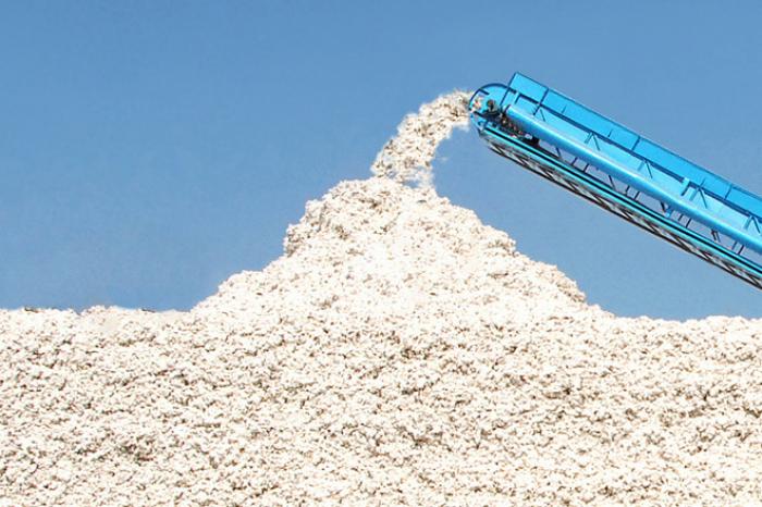 Azerbaijan eyes to increase cotton yields