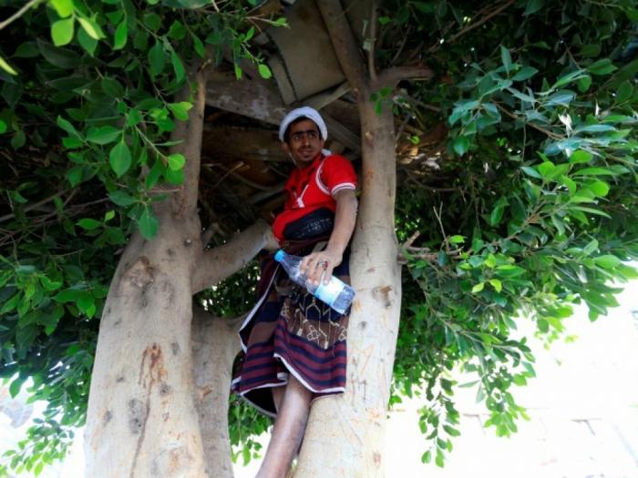 Dans la capitale yéménite, un sans-abri vit dans un arbre