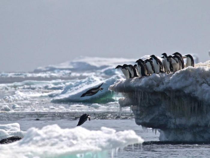 Fury as China, Russia and Norway block landmark Antarctic ocean sanctuary plan