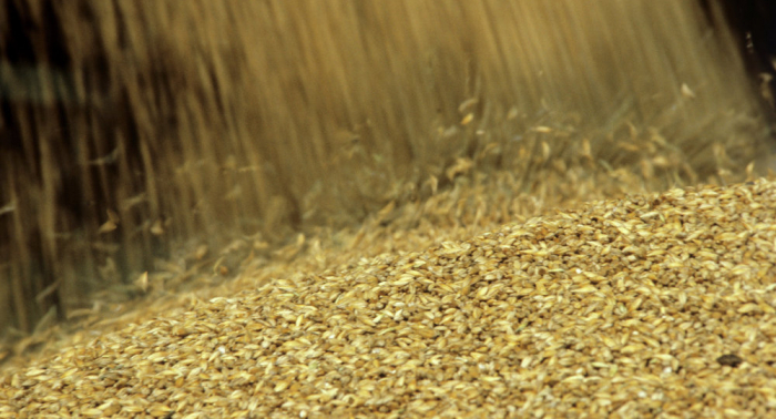 Getreide-Invasion von Moskau? Politiker Litauens über Agrarhandel empört