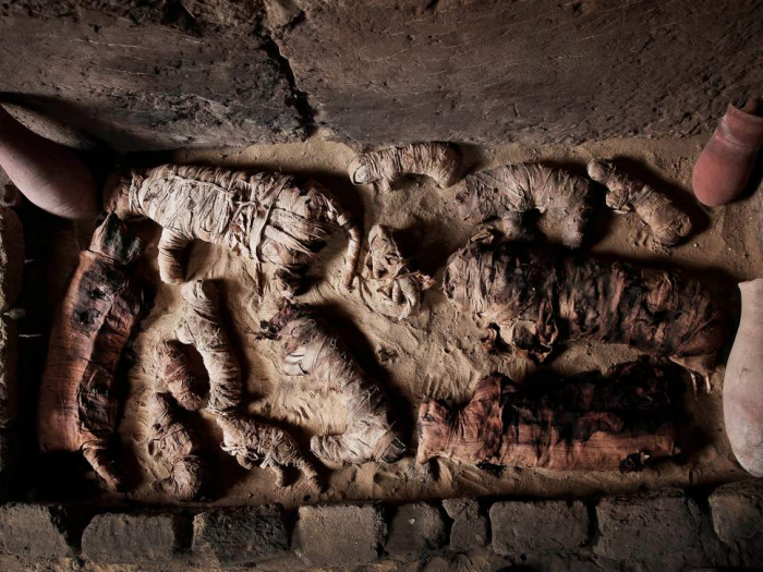 Massive hoard of mummified cats found in ancient Egyptian tombs