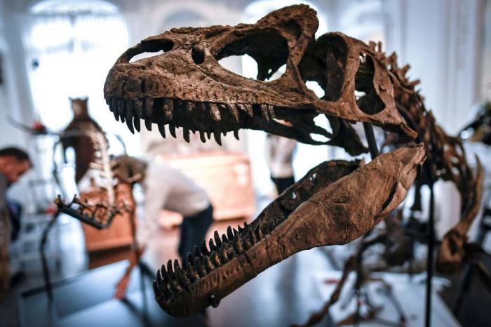 Un expert conteste une vente de dinosaures aux enchères