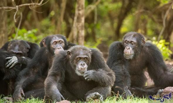 خمس وجهات لزيارة الحيوانات البرية المُهددة بالانقراض