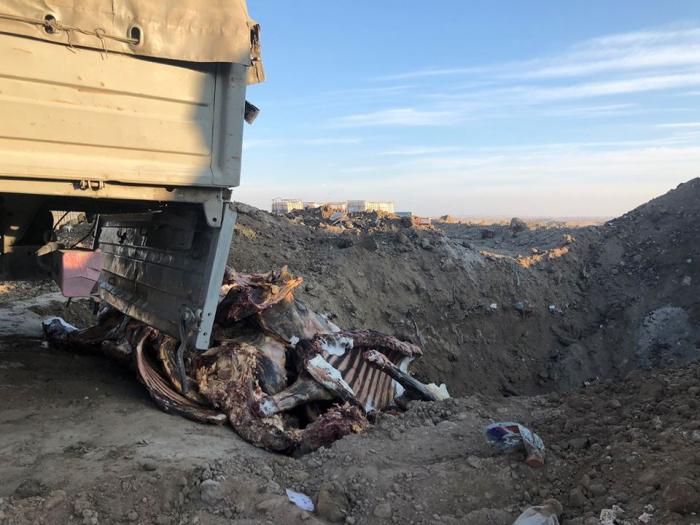 2,5 ton yarasız ət məhv edildi