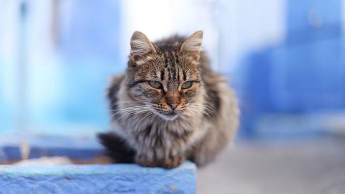 Marruecos: Un turista muere al ser mordido por un gato