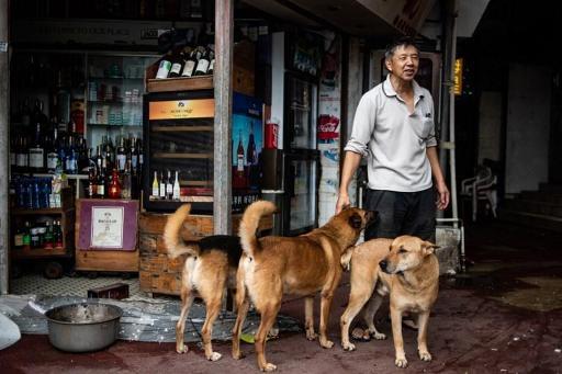 Une ville chinoise interdit les chiens en rue