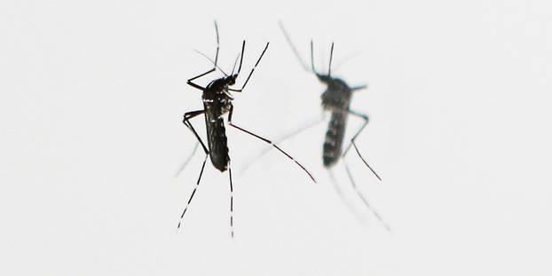 La lutte contre le paludisme au point mort, selon l