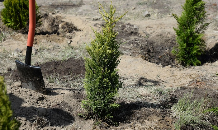 Nazirlik 100 min ağac aksiyasına başlayır