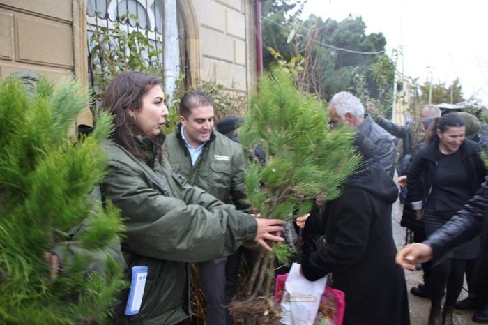 Vətəndaşlara 8000-ə yaxın ağac tingləri paylanılıb