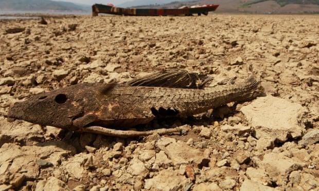 Climate-warming El Niño very likely in 2019, says UN agency