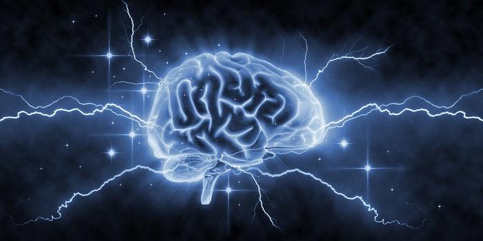 Le cerveau est-il le deuxième repaire des bactéries intestinales?
