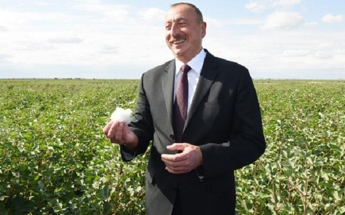 President Ilham Aliyev viewed cotton field in Hindarkh settlement in Aghjabadi