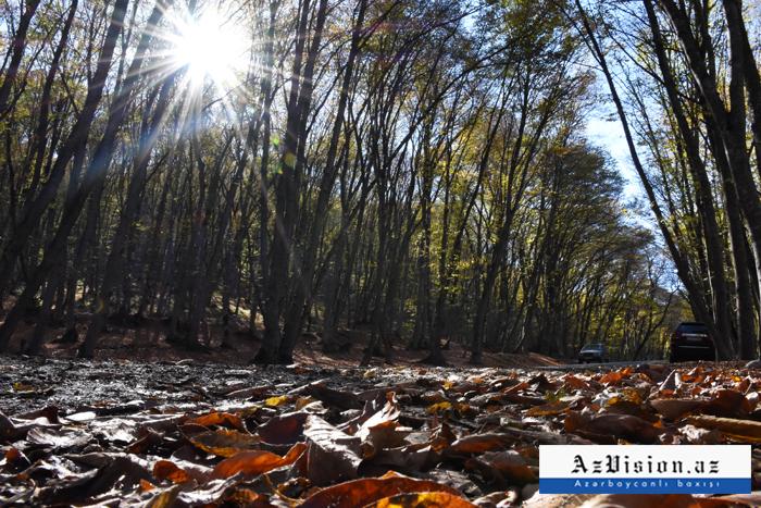 الخريف في قوبا -صور