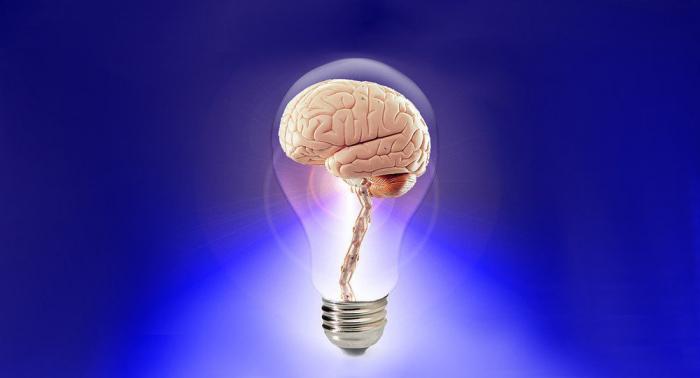 Le mystère du cerveau: une aptitude de l