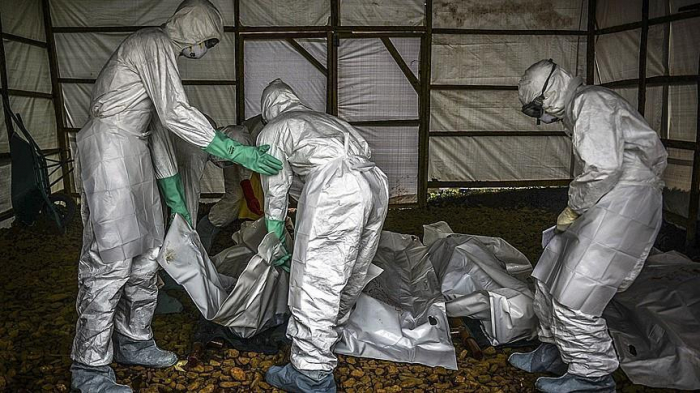 Ebola death toll in DR Congo rises to 271