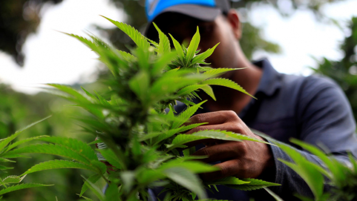 Consumir marihuana altera el perfil genético del esperma