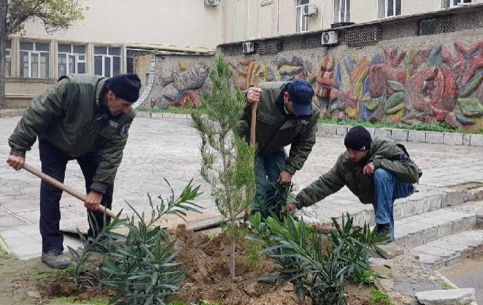 Bakıda 2000-dən çox ağac əkilib