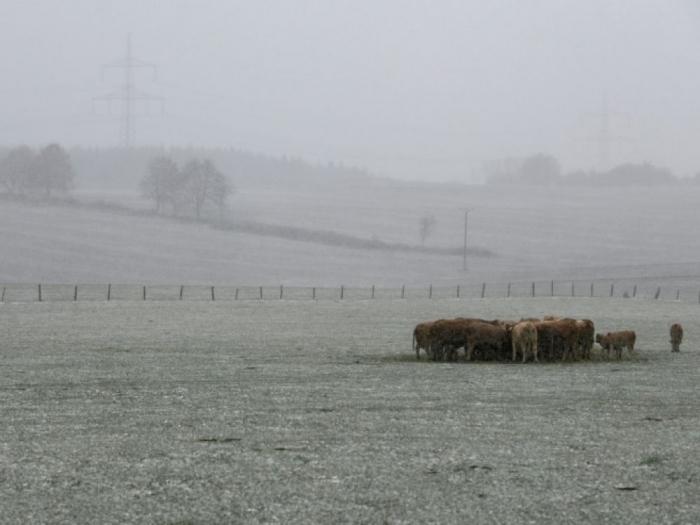 Cop24: Réduire le gaspillage et consommer moins de viande pour nourrir la terre en 2050