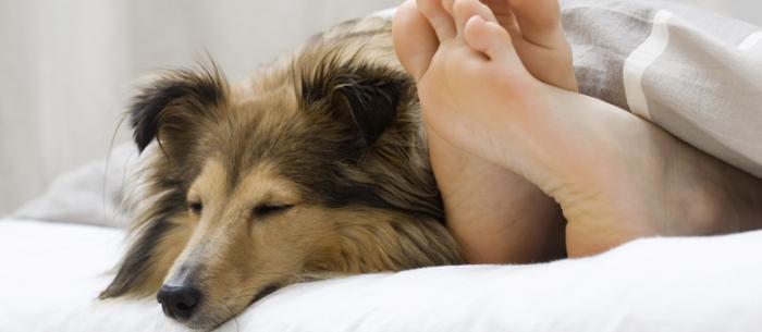 Les femmes dormiraient mieux avec un chien qu