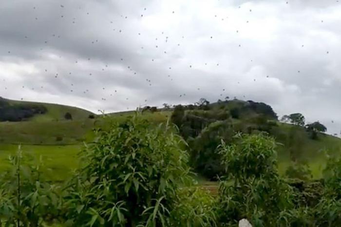السماء تمطر عناكب في البرازيل