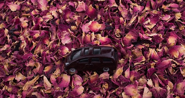 Rose scent reduces risk of car accidents by 64 pct, study says