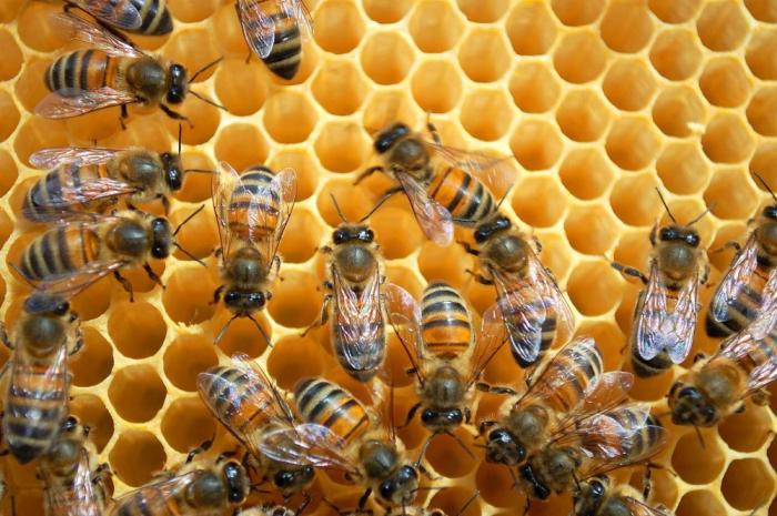 Bakou accueillera la 5e édition de la Conférence internationale sur l'apiculture
