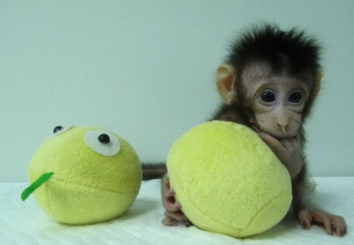 China clones gene-edited monkeys to aid disorder research