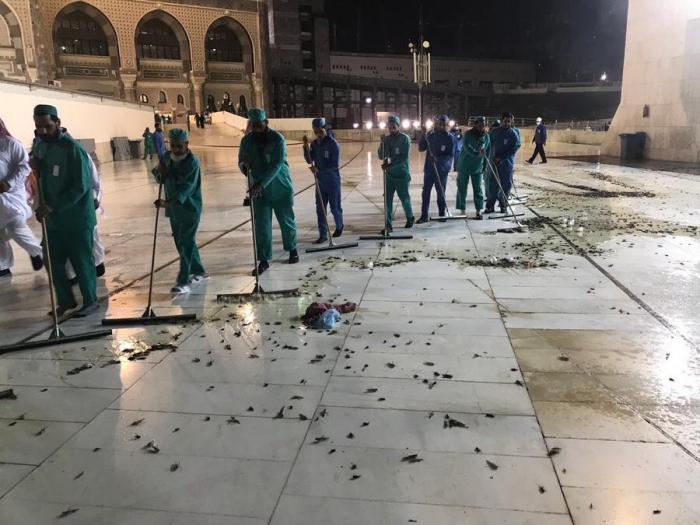 Arabie saoudite:Des cafards envahissent La Mecque -   VIDEO