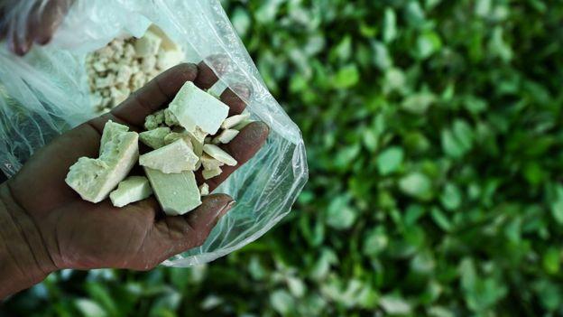 Colombia coca production: US