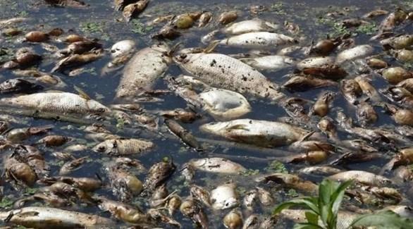 أستراليا: أجهزة تهوئة للأنهار للحفاظ على الأسماك