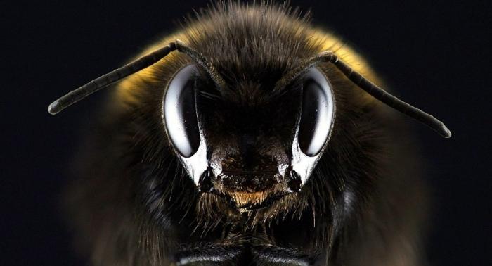 Nicht Atomkrieg, nicht Meteoreinschlag: Insektensterben bedroht die Menschheit