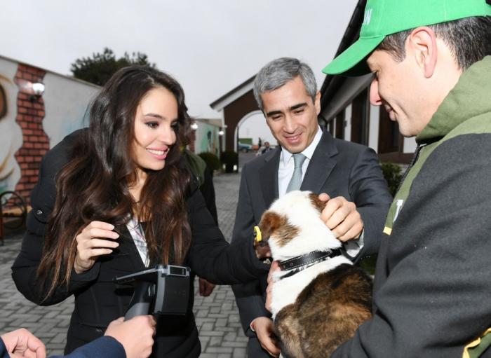In Balakhani Siedlung Tierheim für herrenlose Hunde eröffnet