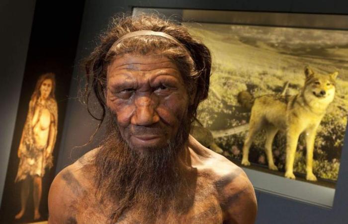 Neanderthals stood up straight like modern humans, study reveals