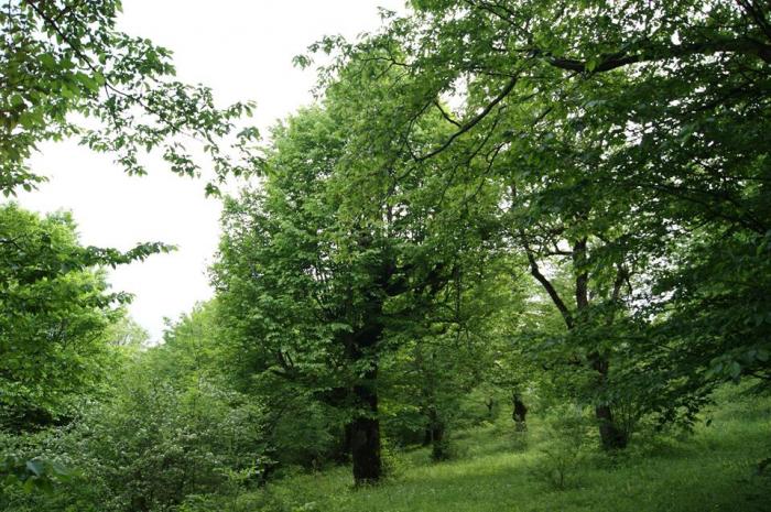 Meşələrdə meyvə bağları salınır