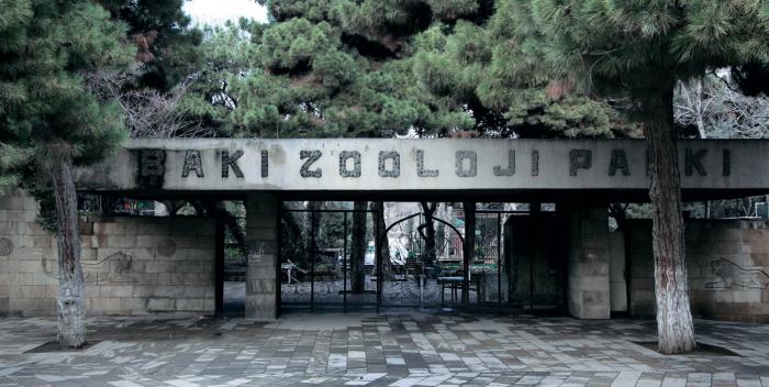 """""""Heyvanları iynə vurmaqla köçürməyəcəyik"""" - Zooparkın direktoru"""
