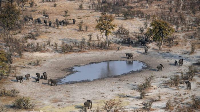Le Botswana légalise la chasse aux animaux sauvages