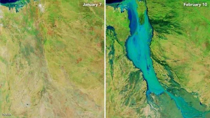 أمطار جهنمية تقتل نصف مليون بقرة في أيام