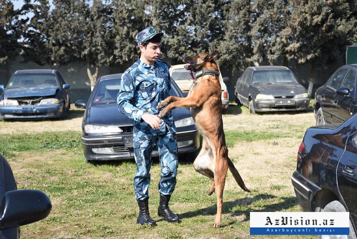 """5 """"dil bilən"""", qiyməti 15 min avro olan axtarış itləri - REPORTAJ (FOTOLAR)"""
