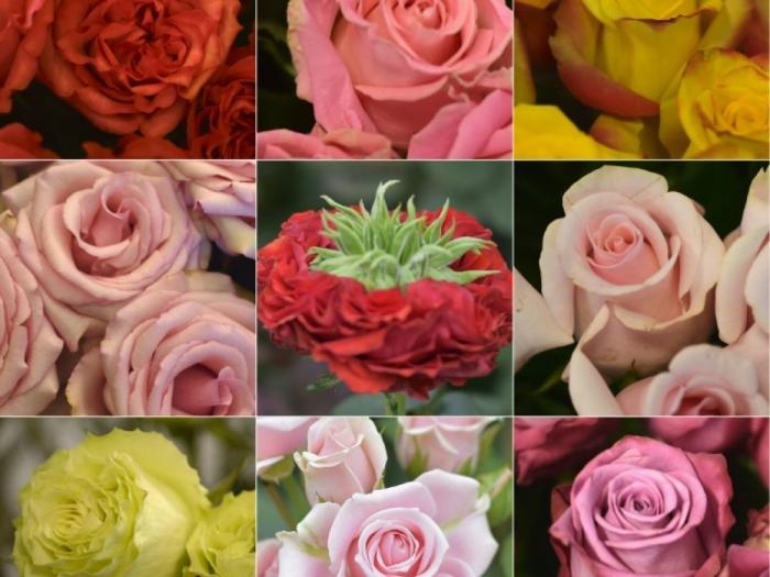 La Saint-Valentin, fashion week des roses d
