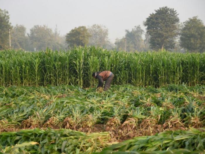 La FAO met en garde contre le risque de pénurie alimentaire faute de biodiversité
