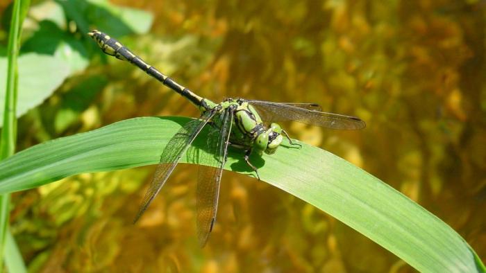 Les insectes pourraient avoir complètement disparu dans cent ans