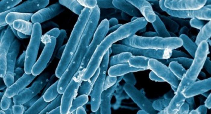 OMS:   la tasa de mortalidad por la tuberculosis se reduce en 42% desde 2000