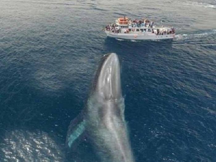 Sərnişin gəmisi balina ilə toqquşub - 87 nəfər yaralanıb